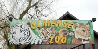 Big Ang Mural Petition by Petition Olmense Zoo Moet Open Blijven