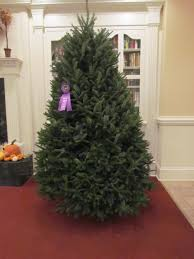 Plantable Christmas Trees For Sale by Cool Springs Nursery
