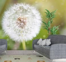 löwenzahn pusteblume natur tapete
