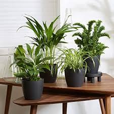 4er set luftreinigende zimmerpflanzen vier grünpflanzen mit topf elho übertopf höhe 25 30 cm topf ø 12 cm