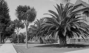 Palm Trees On Figueroa Street South Of 16th Circa 1890 Courtesy The Title