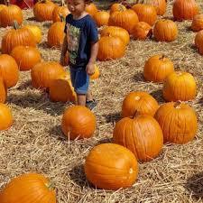 Free Pumpkin Patch Charleston Sc by Boone Hall Farms 153 Photos U0026 68 Reviews Farmers Market 2521