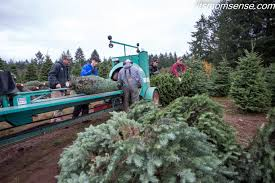 Christmas Tree Baler Netting by Oregon Archives It U0027s Momsense