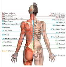 interieur corps humain femme la maladie le mal a dit le lien entre les émotions et notre