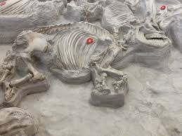 Ashfall Fossil Beds State Historical Park by Honest Ab Evolution And Related Topics My Fun Evolution Trip