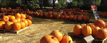 Ms Heathers Pumpkin Patch Louisiana by Pumpkin Patches