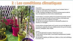 culture des légumes en pot les régles de base