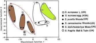 a re examination of the salicornias amaranthaceae of saudi