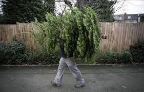 Waste Management Christmas Tree Pickup Mn by Tree Recycling What To Do With Your Christmas Tree Cbs Seattle