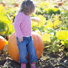 Pumpkin Patches Maryland Heights Mo by Master Guide To Fall Family Fun In St Louis And St Charles