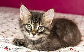 russian cat names fabulous russian cat names 55 powerful names for your cat