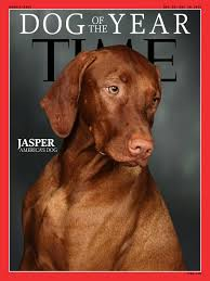 Vizsla Dog Breed Shedding by 3 Time U0027s Dog Of The Year Jasper America U0027s Dog By Fivefanps