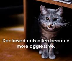 cost to declaw cat 8 reasons why you should never declaw your cats peta