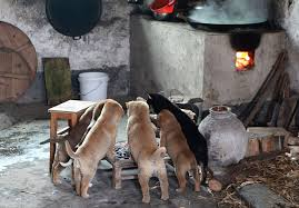 Cute Puppies Barking Cold Stove 5