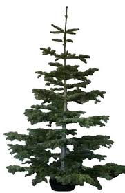 Noble Fir Artificial Tree Beautiful Inspiration Trees Frontgate Christmas