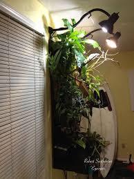 Basking Lamp For Chameleon by 73 Best Chameleons Images On Pinterest Chameleon Lizard