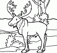 Realistic Wolf Coloring Pages Animal Adult Forest Animals