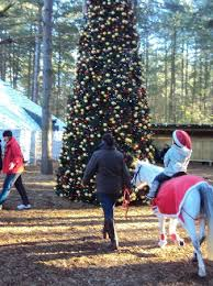 Center Parcs Sherwood Forest Beautiful Christmas Tree And Pony Rides To Santa