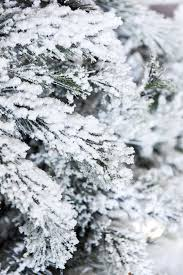 Flocking Powder For Christmas Trees by How To Flock A Christmas Tree
