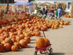 Chatfield Pumpkin Patch Hours by 5 Amazing Pumpkin Patches In Colorado You Must Visit This Fall