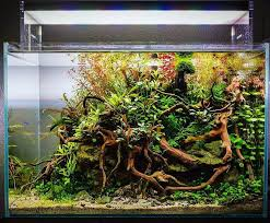 848 best Aquascaping Planted Tanks