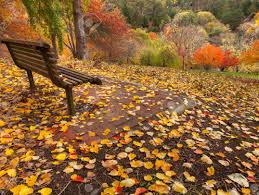 bench design simple wood bench ideas for your home stunning park