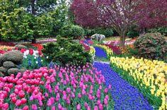 tulips bloom in abundance around here tulip festival is the month