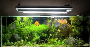 aquarium d eau douce installer un aquarium d eau douce