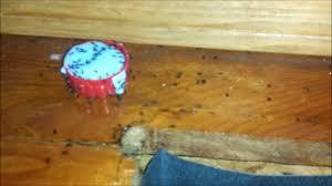 Fleas Hardwood Floors Borax by Kill Ants In Two Days Or Less Ants Vs Boric Acid Youtube