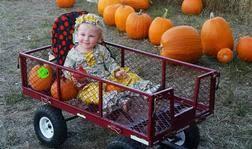 Pumpkin Patch Alabama Clanton by Pumpkin Patch Event Venue Dream Field Farms Fitzpatrick Al