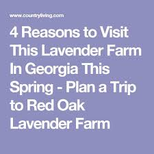 Burts Pumpkin Farm Controversy by 12 Best Vacation Atlanta Images On Pinterest Atlanta Atlanta