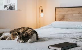 tipps für deine schlafzimmerbeleuchtung swissflex