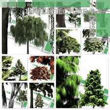 Highresolution Cutout Trees Collection 2 PNG Format