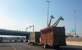 During Transport, A Giraffe In South Africa Hits Head On Overpass ... Nashville Traffic Inrstate 40 Reopens Truck Stuck Under Overpass Update Lougheed Highway Open After Semi Hits Bc Langley Hwy 1 Hit By Trucks Twice In 14 Hours Truck Rosedale Queens Causes Lirr To Reduce Dump Gets South Bend Bridge Video Major Delays For Commuters Tray On An Youtube Moving Storrow Drive And Flips Over Semitruck Container Blocks Hitting One Dead 18wheeler I20 East Texas Six Mile Road Closed Vehicle Collides With