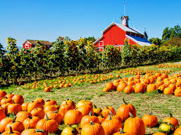 Sand Mountain Pumpkin Patch by 20 Incredible Ways To Decorate With Pumpkins This Fall Southern