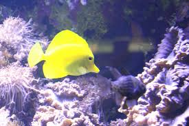 une balade à l aquarium tropical de la porte dorée morandmors