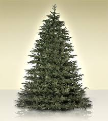 Pacific Noble Fir Clearance