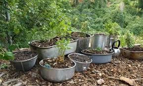 Garden Hack Container Garden Ideas