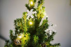 Xmas Tree Waterer by How To Tell If Your Christmas Tree Needs Watering Better Homes