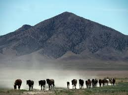 100 Roadshow Trucking Severe Drought Threatens Wild Horses In American West Every Animal