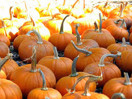 Shady Lane Farm Pumpkin Patch by Guide To Pumpkin Picking In Mississippi I Love Halloween
