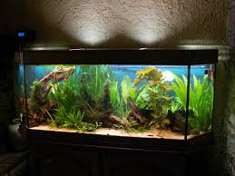 aquarium 500 litres aquarium poisson pas cher vrac it
