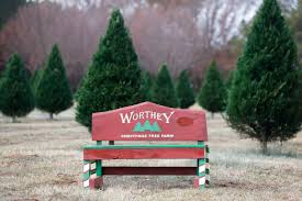Leyland Cypress Christmas Tree by Worthey Christmas Tree Farm Mud And Magnolias