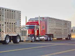 Custom Semi Cattle Trucks | And C Livestock Peterbilt 379 ...