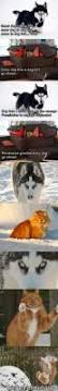 Do Pomskies Shed Fur by Best 20 Pomeranian Husky Price Ideas On Pinterest Pomsky