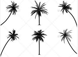 Black And White Palm Tree Drawing Tumblr Pictures To Pin