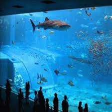grand aquarium de malo grand aquarium de malo web libre