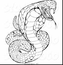 Twwaus Wp Content Uploads 2017 11 Snake Color