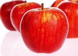 elma ağaçı