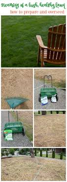 25+ Trending Lawn Seed Ideas On Pinterest | Lawn Repair, The Beer ... 25 Trending Lawn Seed Ideas On Pinterest Repair The Beer Portfolio Mowing Ferlization Treatment Pauls Best Goodbye Grass 7 Inspiring Ideas For A No Mow Backyard Artificial 12 Stunning Modern Itallations Install Balinese Garden Bali What Is Carpet How To Grow Things Consider Before Use Edging To Keep Weeds And Away From Flower Beds Hgtv Front Yard Landscape No Grass Pinteres Dwarf Mexican Feather Google Search Desert Landscape Outgrowing The Traditional Scientific American Blog Restore With Dead Soil After 9 Steps